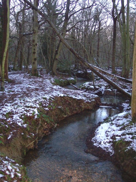 Stream in Blean Woods