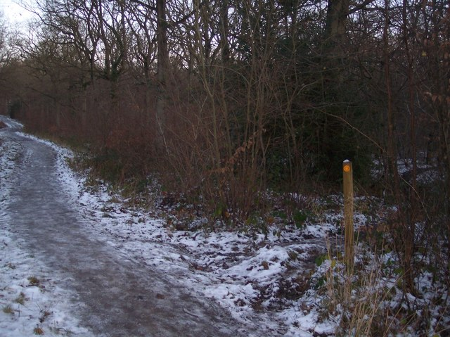 Footpath junction on the track in Blean Woods