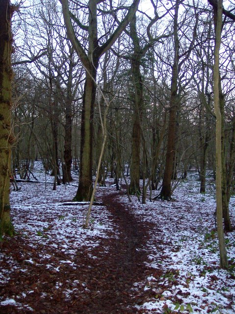 Footpath in Church Wood