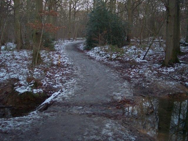 Footbridge and path junction in Blean Woods