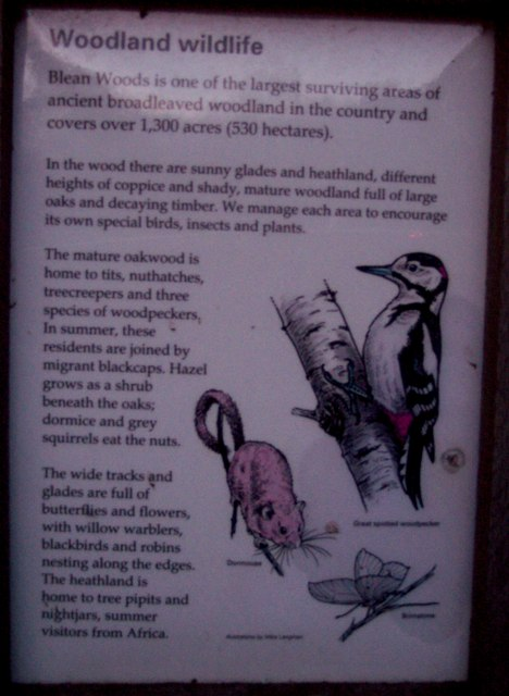 Part of the Information Board in Blean Woods