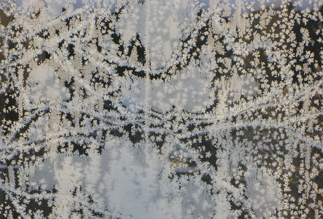 Frosted window, nature's version of net curtains