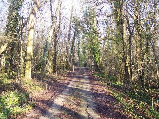 Farm track towards Forstal Farm