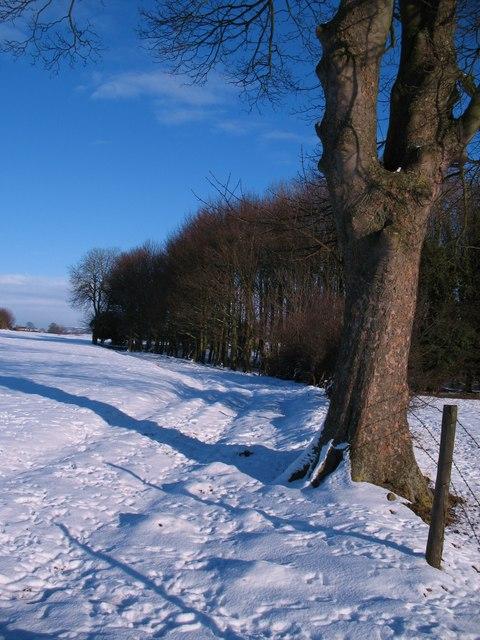 Bridleway to Aram Grange