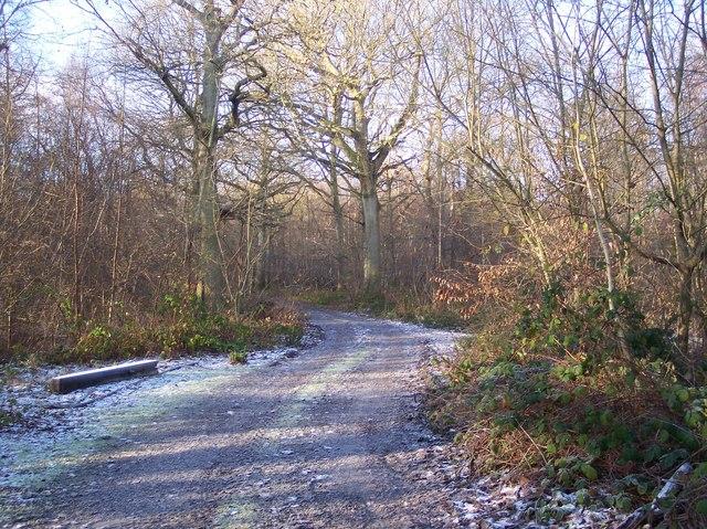 Track towards Hayden Wood