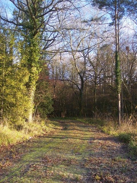 Track into Hale Wood