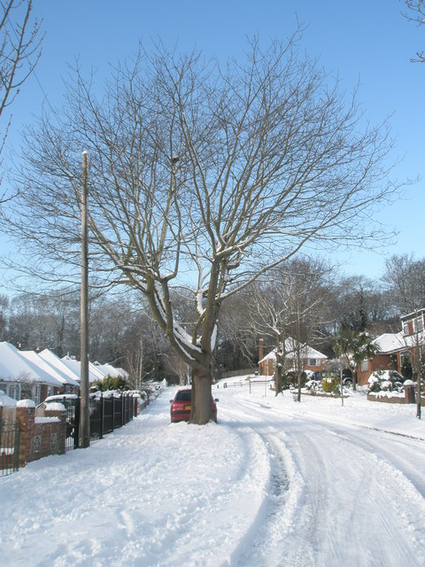 Mid section of a snowy Oakwood Avenue