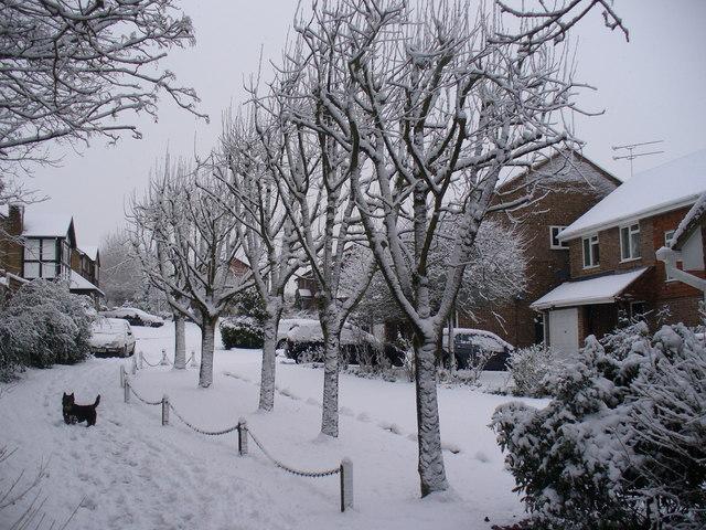 Snowy Oakley Dell