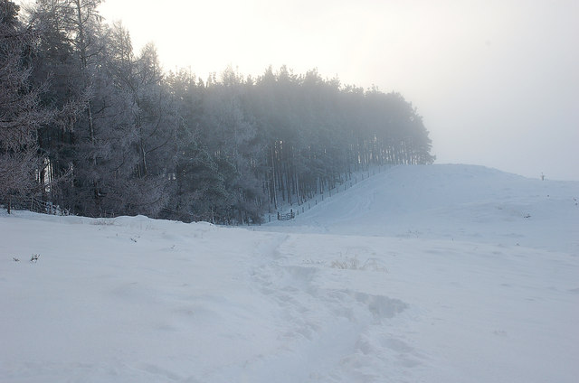 Forest edge, Cademuir