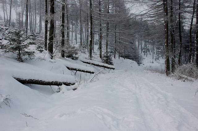 Winter in the forest, Cademuir