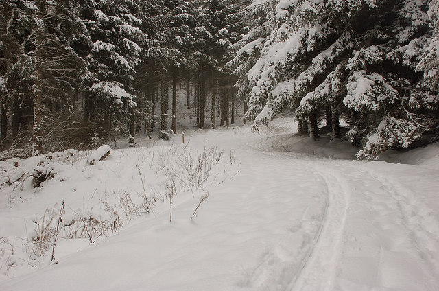Forest road ski route