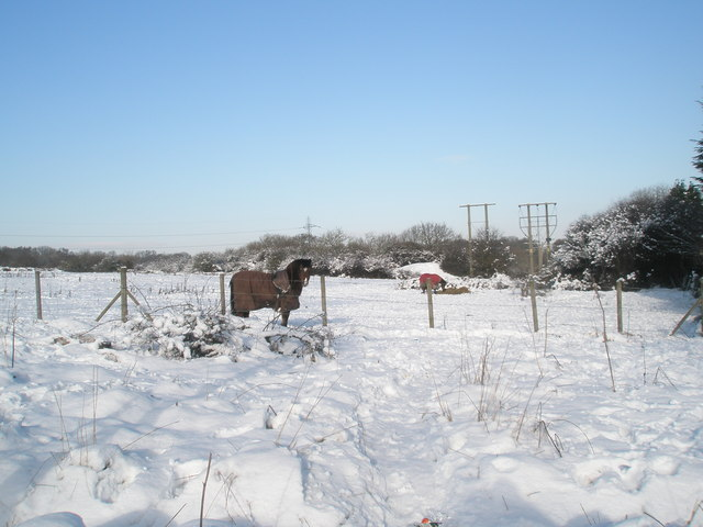 Chilly ponies to the north of Purbrook Way