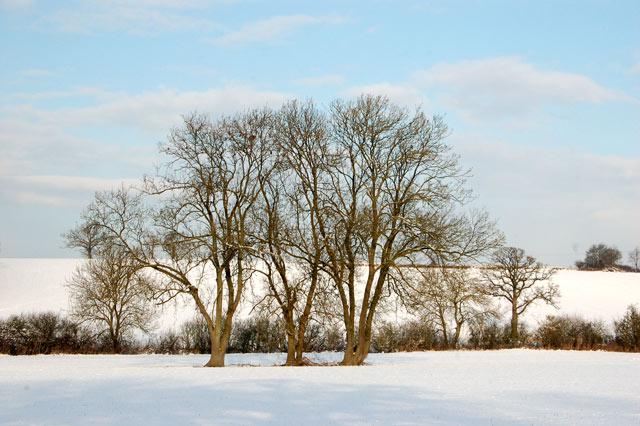 Tree symmetry in the snow west of Southam