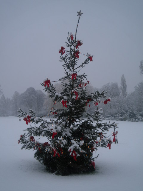 Christmas tree, Golders Green Crematorium, Hoop Lane NW11