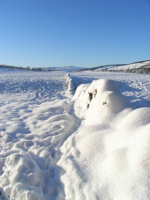 Snow covered dry stane dyke