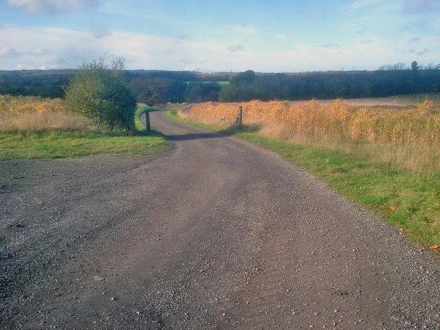 Track to Quarry Banks