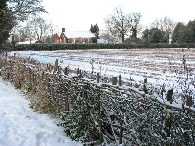 Snow on traditionally laid hedge