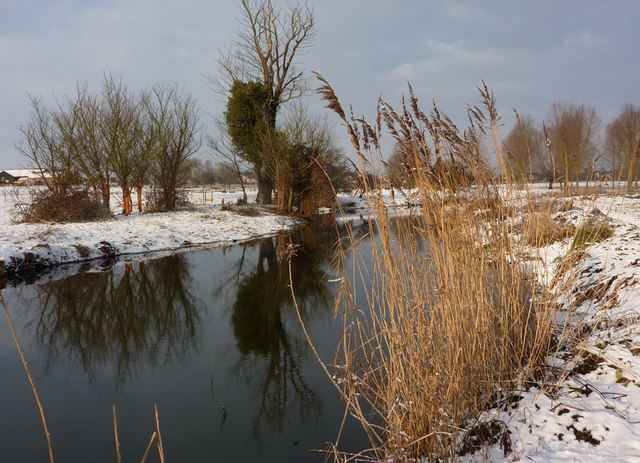 Reeds and trees by the river Gipping
