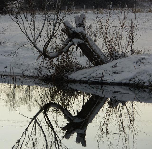 Tree stump and reflection