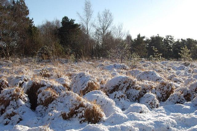 Tussocks, Cranborne Common, Dorset