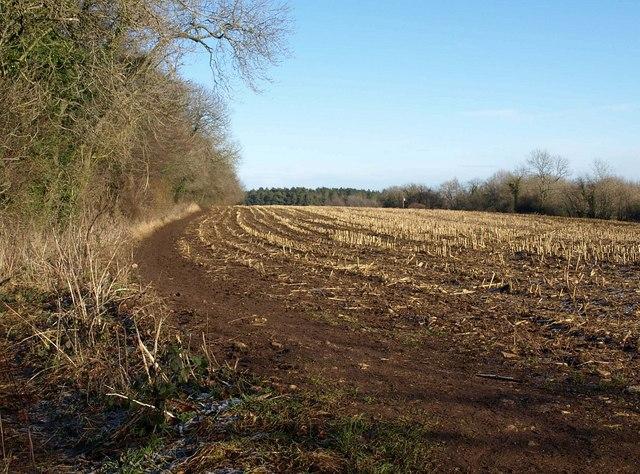 Field on Wotton Hill