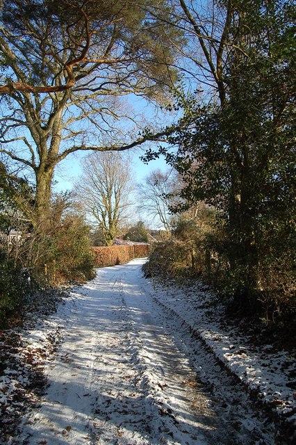 Bridleway going to Cranborne Common