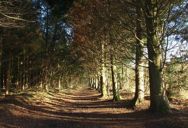 Bridleway, Westridge Wood