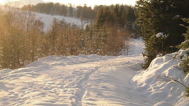 Track, Auchteraw Woods