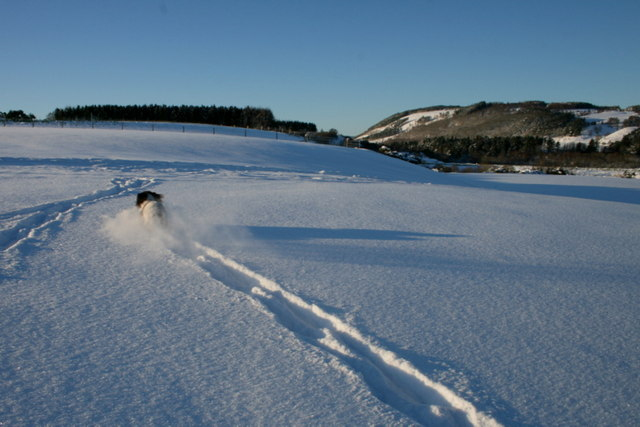 And it's off - a spaniel blazes a trail through the snow