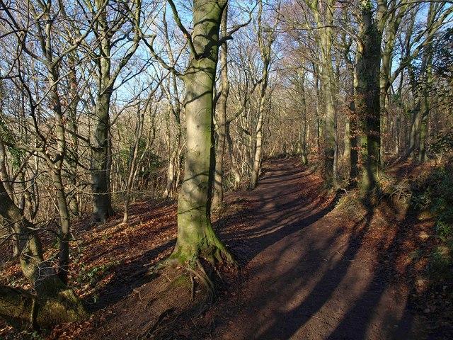 Cotswold Way in Westridge Wood