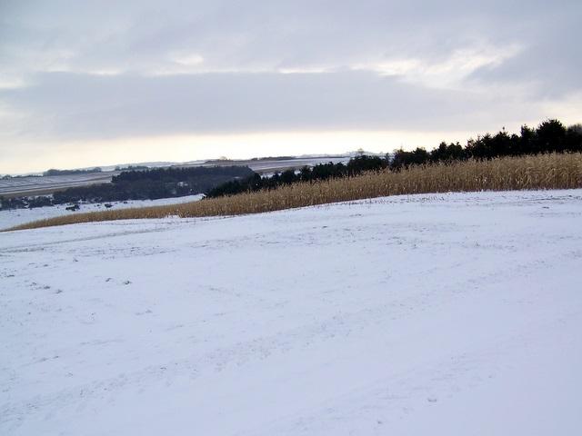 Game crop, Knighton Hill