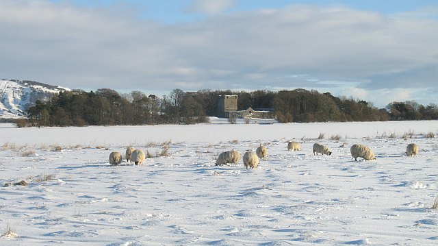 Sheep, Loch Leven