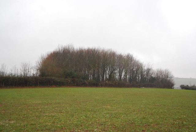Woodland outside Stogumber