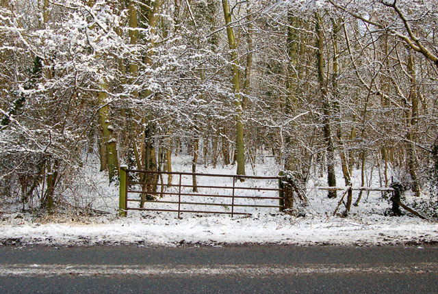 Gate into a snow-covered spinney west of Southam