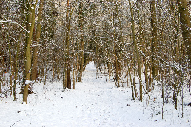 Footpath through a spinney north of Welsh Road, Southam