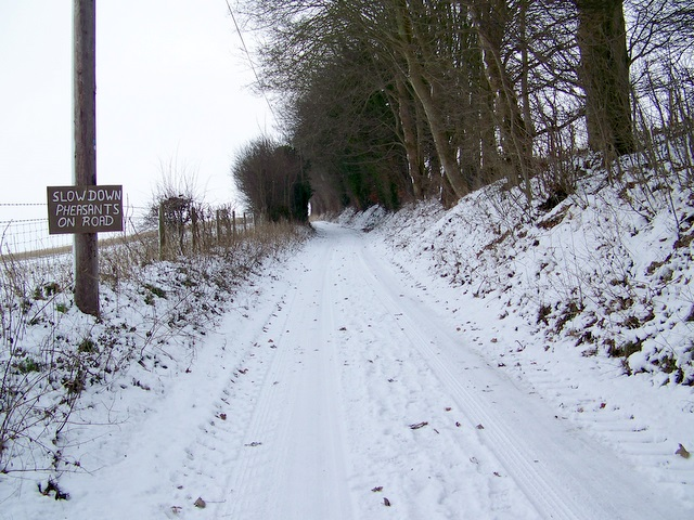 Slow down pheasants on road