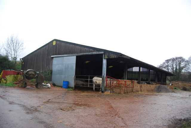 Cattle in a barn, Escott Farm
