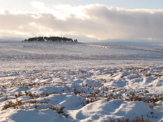 Snowy panorama from Stobb Cross (14: SW - Green Hill)
