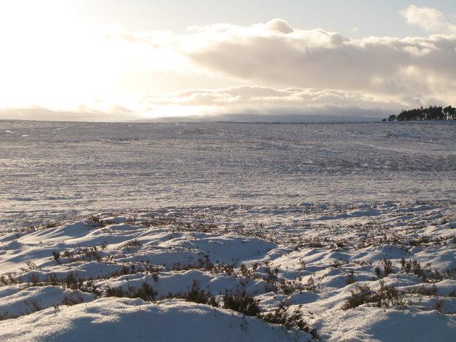 Snowy panorama from Stobb Cross (15: SSW - Windyhead)