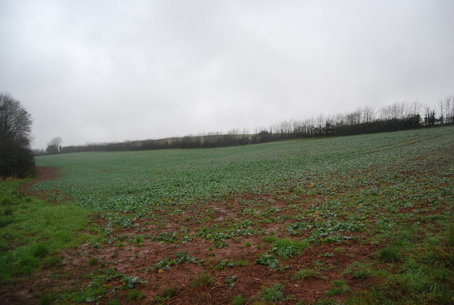 Field off Escott Lane