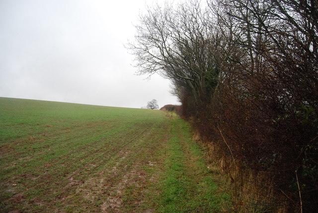 Footpath along a hedge