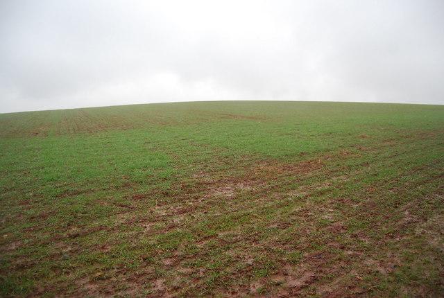 Winter wheat in a red field