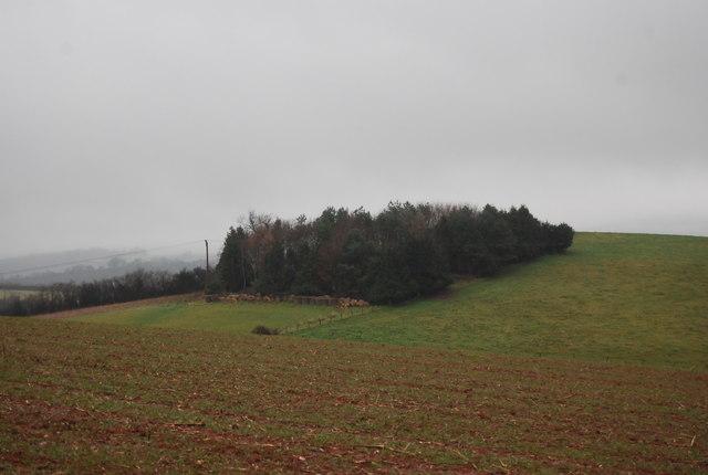 Plantation on the hillside