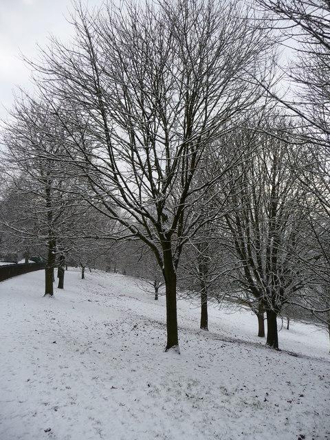 Tiverton : People's Park Trees