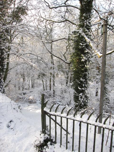 Footpath through The Dingle