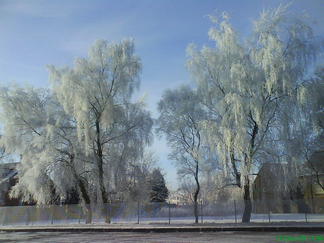 Frosty day in Carfin