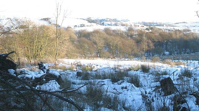 Clear felled area, Cullaloe Hills