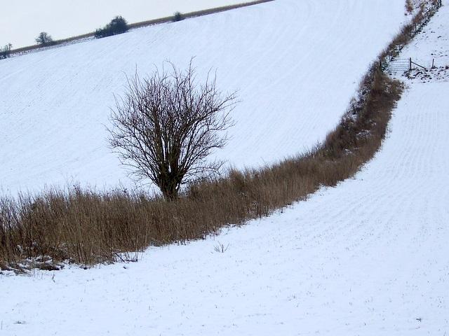 Field boundary near Bishopstone