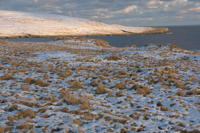 Tussocky grassland at Hagdale in the snow
