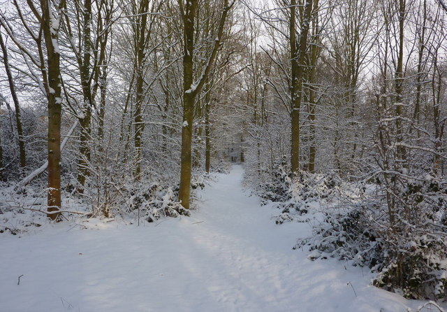 Thornham estate footpath in winter